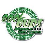 800 Buds - Hayward