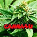Canna4U - Yuba City
