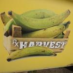 Rx Harvest- YV