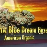 AOC - American Organic Collective