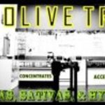 Downtown Olive Tree Collective
