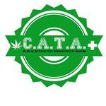 Square_cata