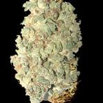 Kannabis Meds