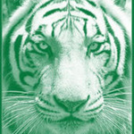 Green Tiger Collective