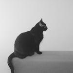 KittyKatia