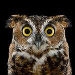Owl-Lover