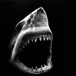 SharkMike