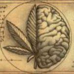 MedicinalOnly