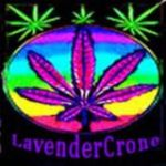 LavenderCrone
