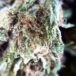 channabis
