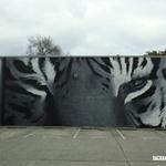 Square_tiger_eyes